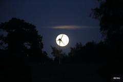 Tonight's harvest moon...