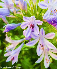 Nile Iris Filter