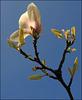 """""""Sugar Magnolia"""""""