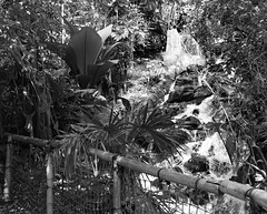 Bamboo fence and cascade in monochrome for Friday
