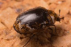 BeetleIMG 3142