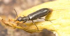 BeetleIMG 3222