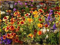 Usseaux : i fiori godono un'ottima salute a 1400 mt.