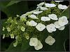 fleurs en cascade ......
