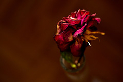 Rose 48/50 : why don't you touch me