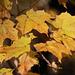 Golden Light of Autumn