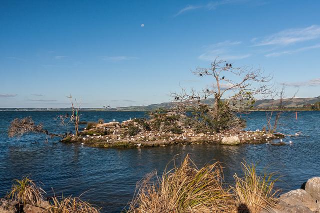 Motutara Island