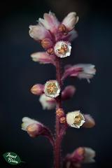 264/366: White Flower Spike