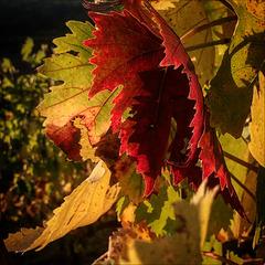 Autumnal colors.