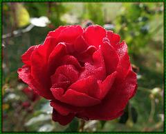 rosée d'octobre