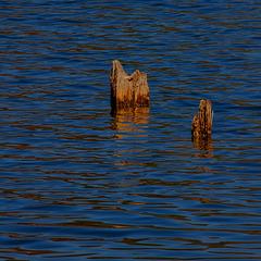 Holzpfosten im See