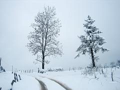 Beginning of a long winter