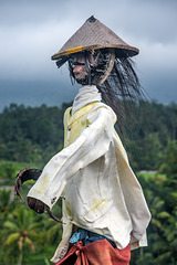 Scarecrow at the Jatiluwih paddy fields