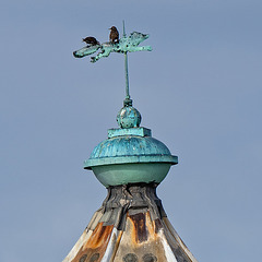 Southsea Castle Lighthouse - birds on the fox