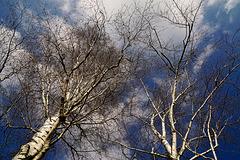 Das blaue Band des Frühlings - The blue ribbon of spring