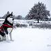 Sinna, Stolz im Schnee