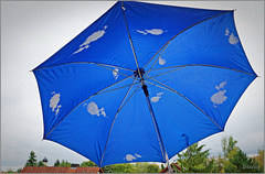 A rainy day? No problem! Think positive under this umbrella! ;-)