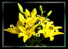 A bouquet of lilies... ©UdoSm