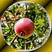 An apple a day...  ©UdoSm