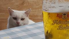 ... ich hätt' so gern ein Bier ...