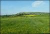 Westmorland gold