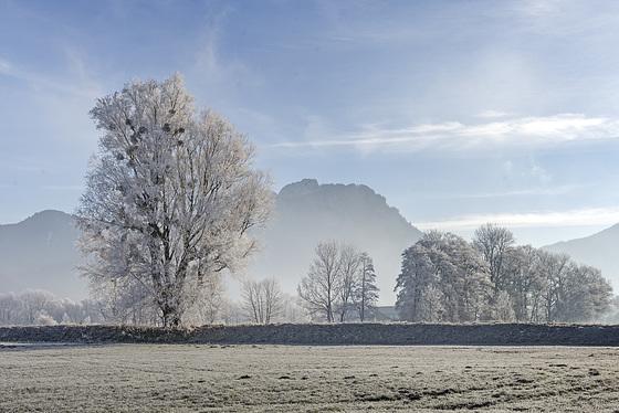 Frosty Morning (2)