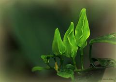 Green....flowers .....  It's spring  in- door