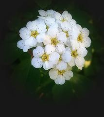 4 (7)...flowers