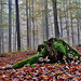 Herbstzeit = Pilzzeit / Autumn time = mushroom season