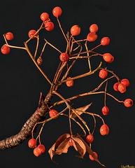 Baum vorm Fenster: Novembersonne