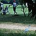 Egret and golf caddies