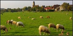 Church Bingelrade -Sint Lambertus