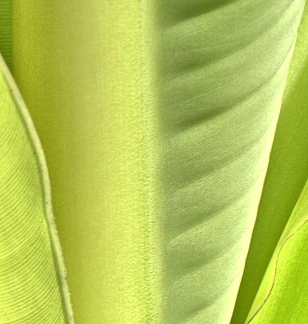 ???? - Bananenstaude - gelöst von Heike