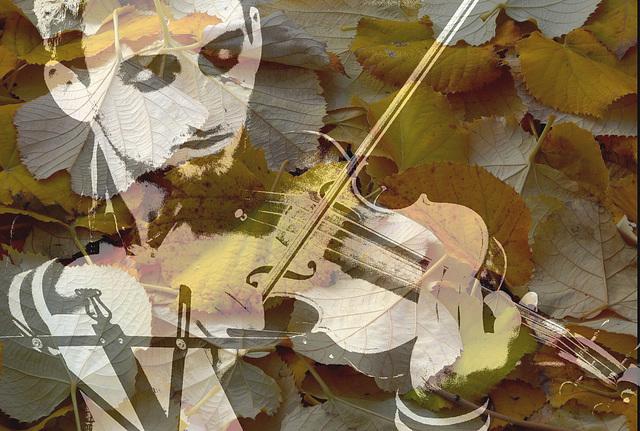... des violons de l'automne ...