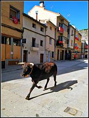 Fiestas de Falces (Navarra), 1
