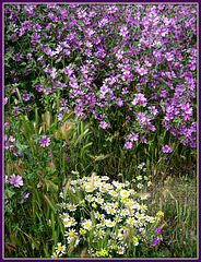 Spring wildflowers, Algete, Spain