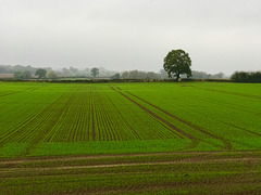 Staffordshire autumn