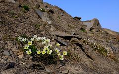 Trollsteinen Hike