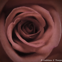 Rose Macro - Topaz Pictorial Warm Haze I