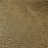 etchings in the sand