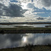 Burton wetlands