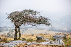 Dartmoor - 20160318