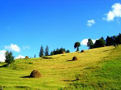 Summer in Petrovo Polje