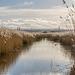 Burton wetlands3