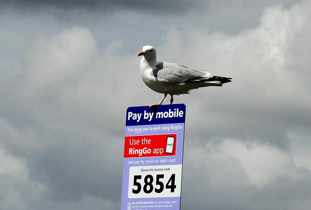 Hands Free Gull