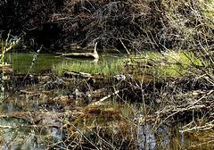 Creek monster