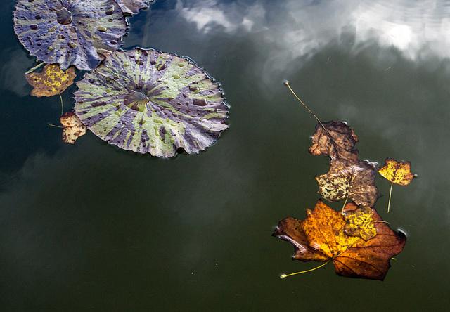 Leaves, Biltmore