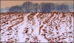 Slope field