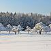 Streuobstbäume im Winterkleid