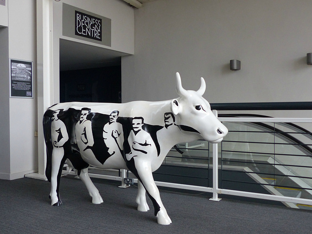 An Unexpected Cow - 7 February 2015